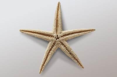 Starfish Realia